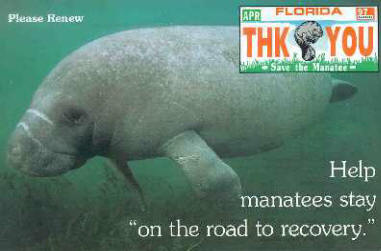 Florida manatees where they live what they eat and how for Renew florida fishing license