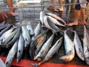 Valid florida saltwater fishing license required harvest blue for Saltwater fishing license florida