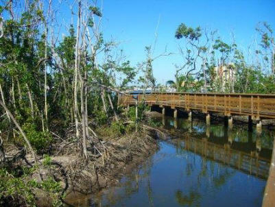 mangroves are a part of the marine environment in florida